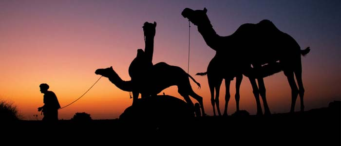 Camel Rajasthan the Taj and Rajasthan 11 days
