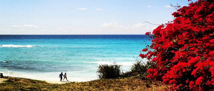 Cuba beach red flowers