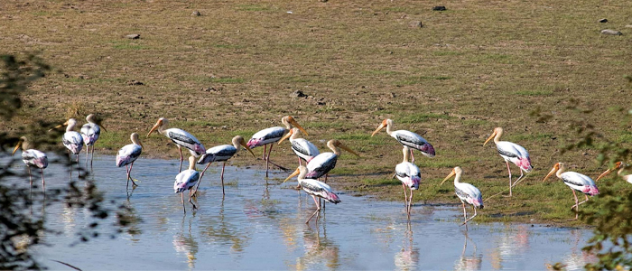 painted storks at keoladeo golden triangle india 8 days