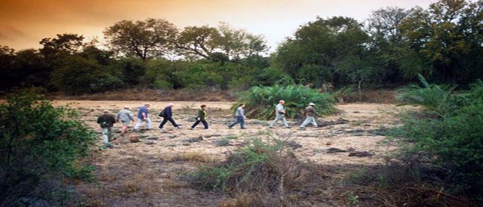 Kruger Safari walking game viewing