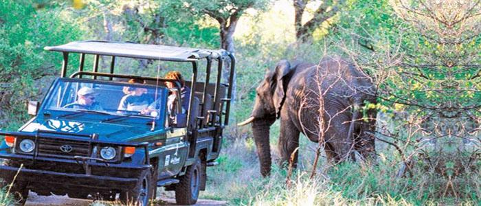Kruger safari elephant image