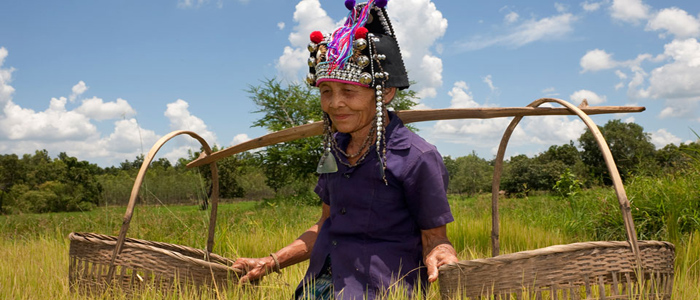 Farming Lao
