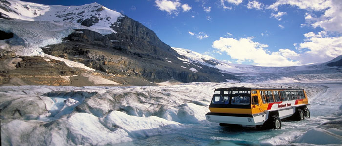 Wildlife and Canadian Rockies Columbia icefield