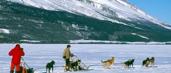 Yukon's Aurora Borealis Dog Sledding - Yukon