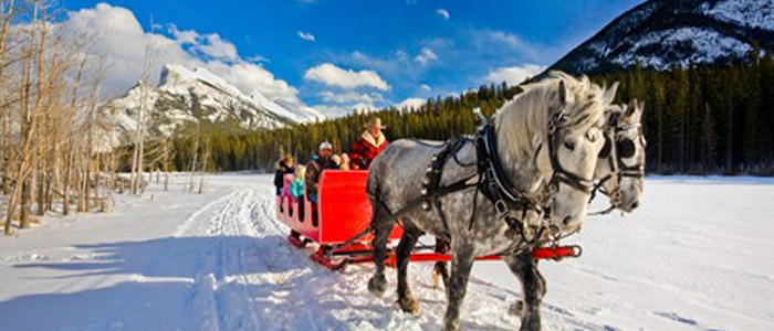 Alberta's Backcountry by Horseback banff horse