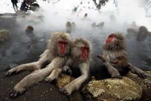 Top things to do Japan monkey nagano
