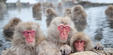 The_famous_Snow_Monkeys-232