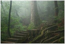 yakushima_forest_trekking