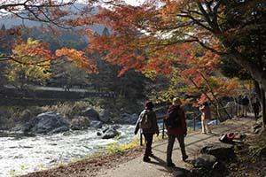 Kanazawa Explored Autumn Leaves at Japanese garden