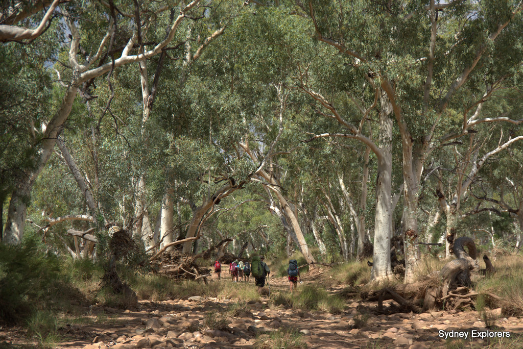 Our first dry river bed Larapinta Trail Sydney Explorers