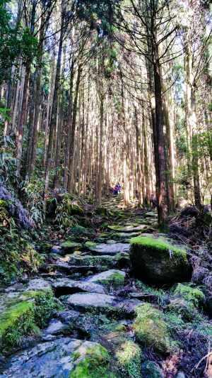 Steps on the Kumano Kodo