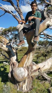 Srini posing up a snow gum