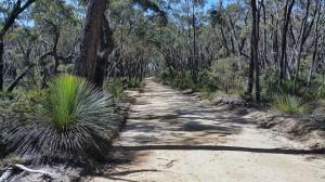 Lovely-fire-trail